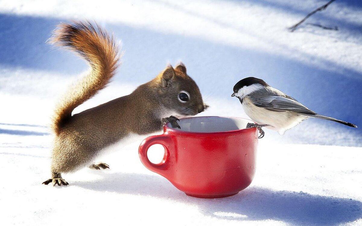 Прекрасного утра картинки с животными