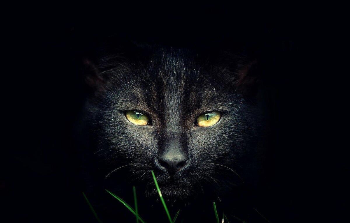 Картинка с кошкой черной, сталина
