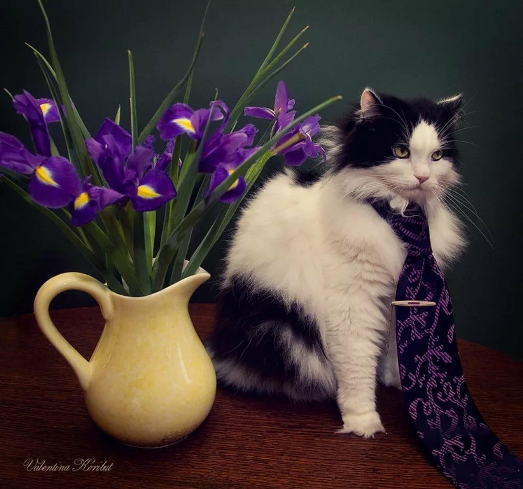 Кошка цветы открытка