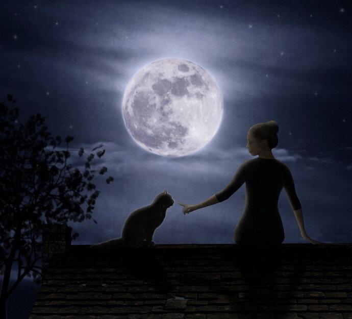 Картинки женщина с котом на крыше, надписью