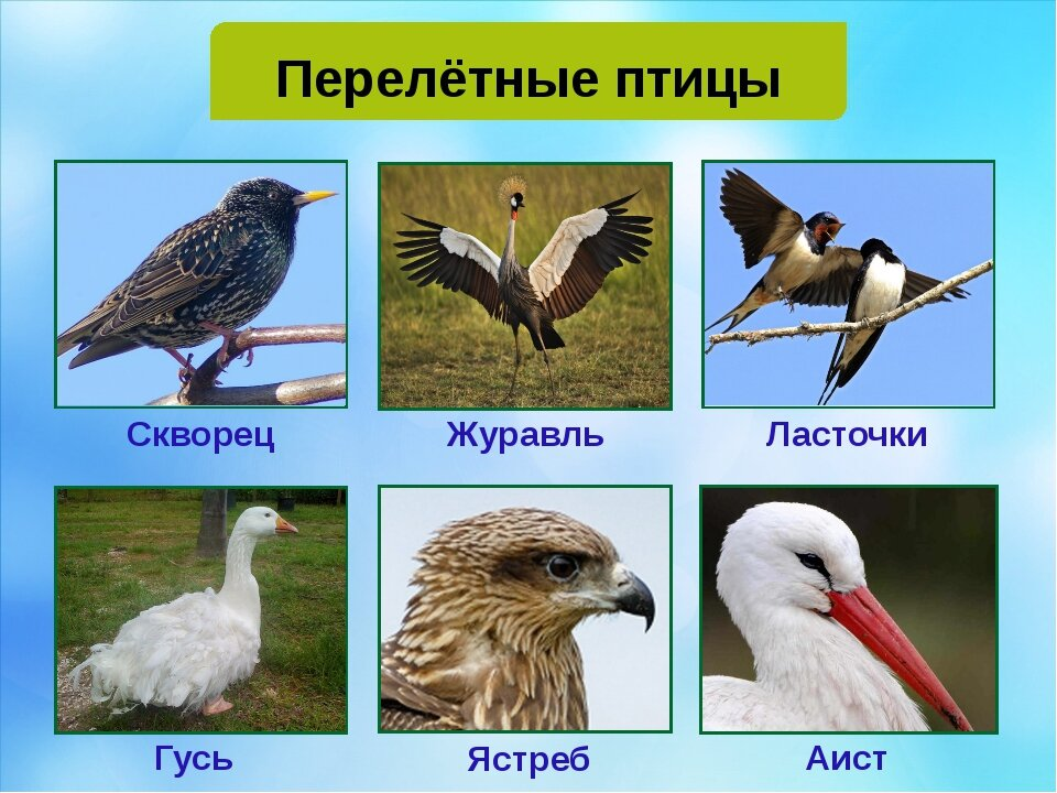 Виды птиц картинки