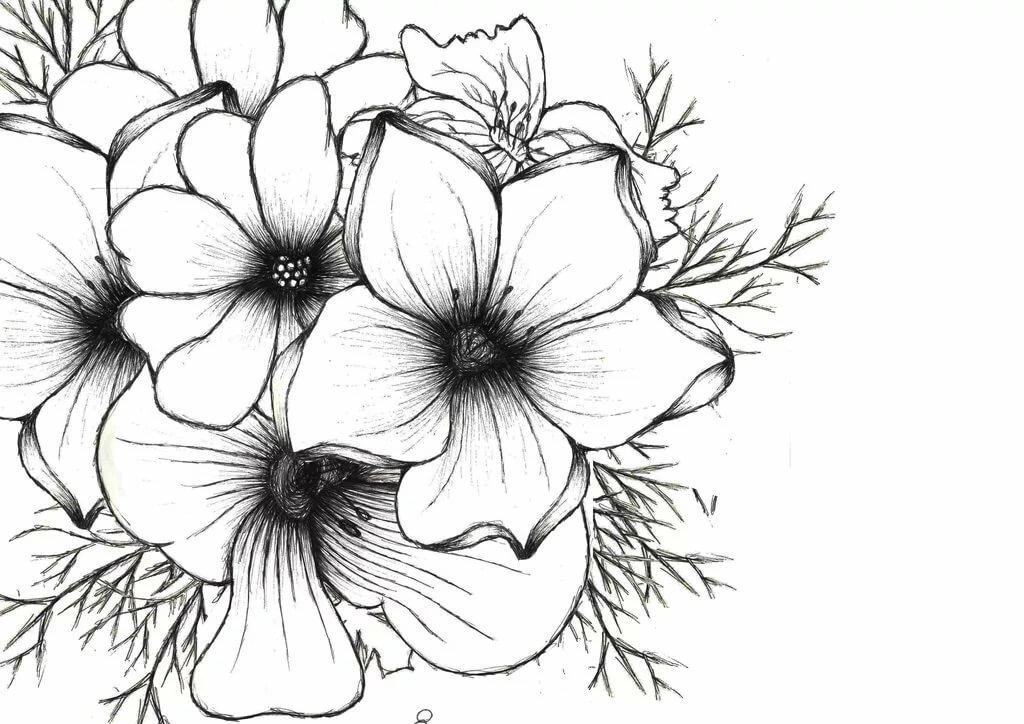 drawings of flowers - 1024×724