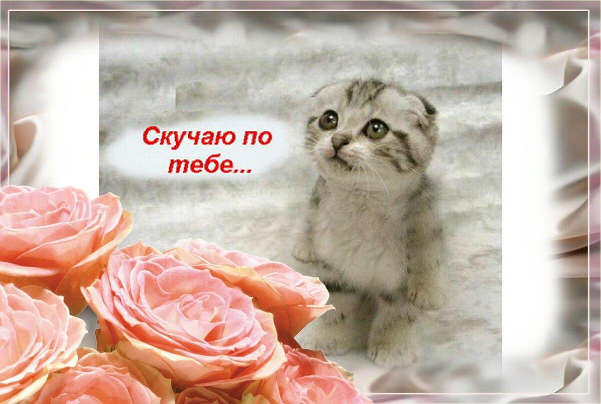 Фото открытка прости меня