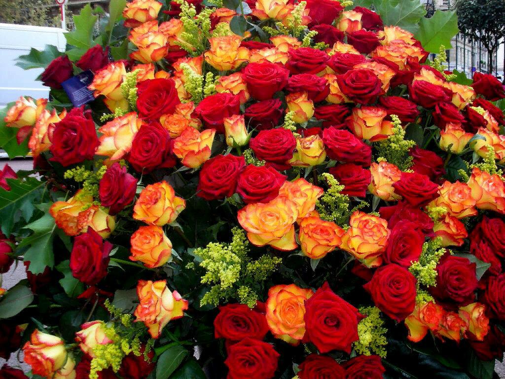 что делать, картинки с днем рождения цветы охапки конкурсе