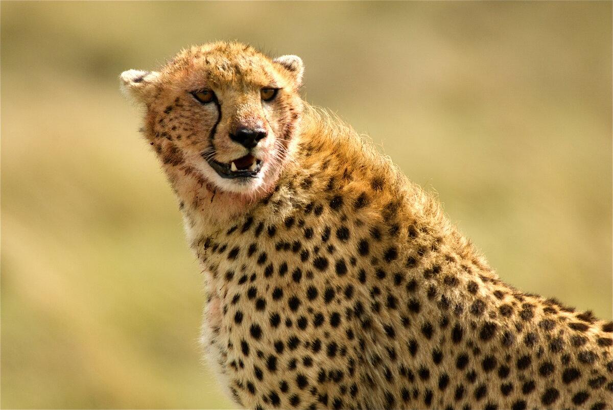Самые хищные животные картинки