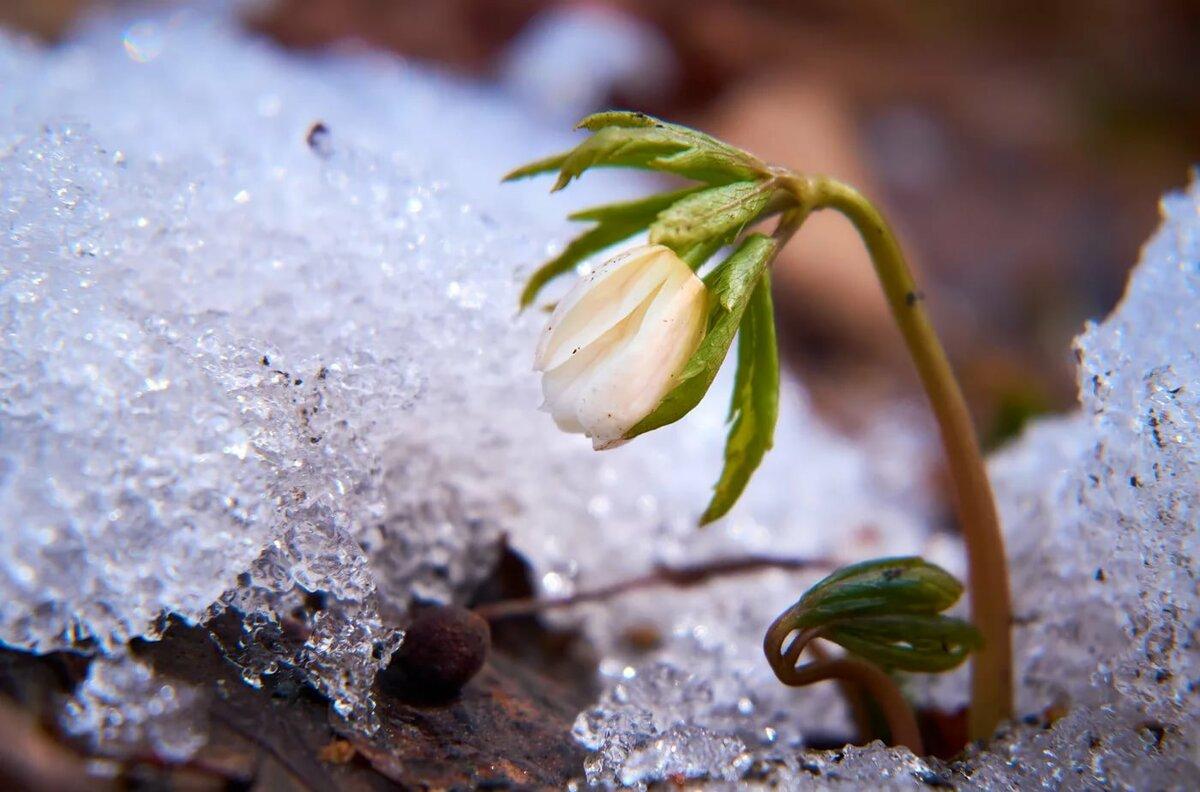 Весенняя природа пробуждение картинки