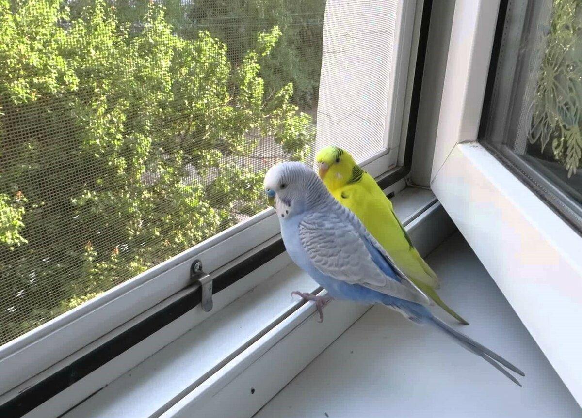 самых-самых картинка попугай за окном спокойно, как