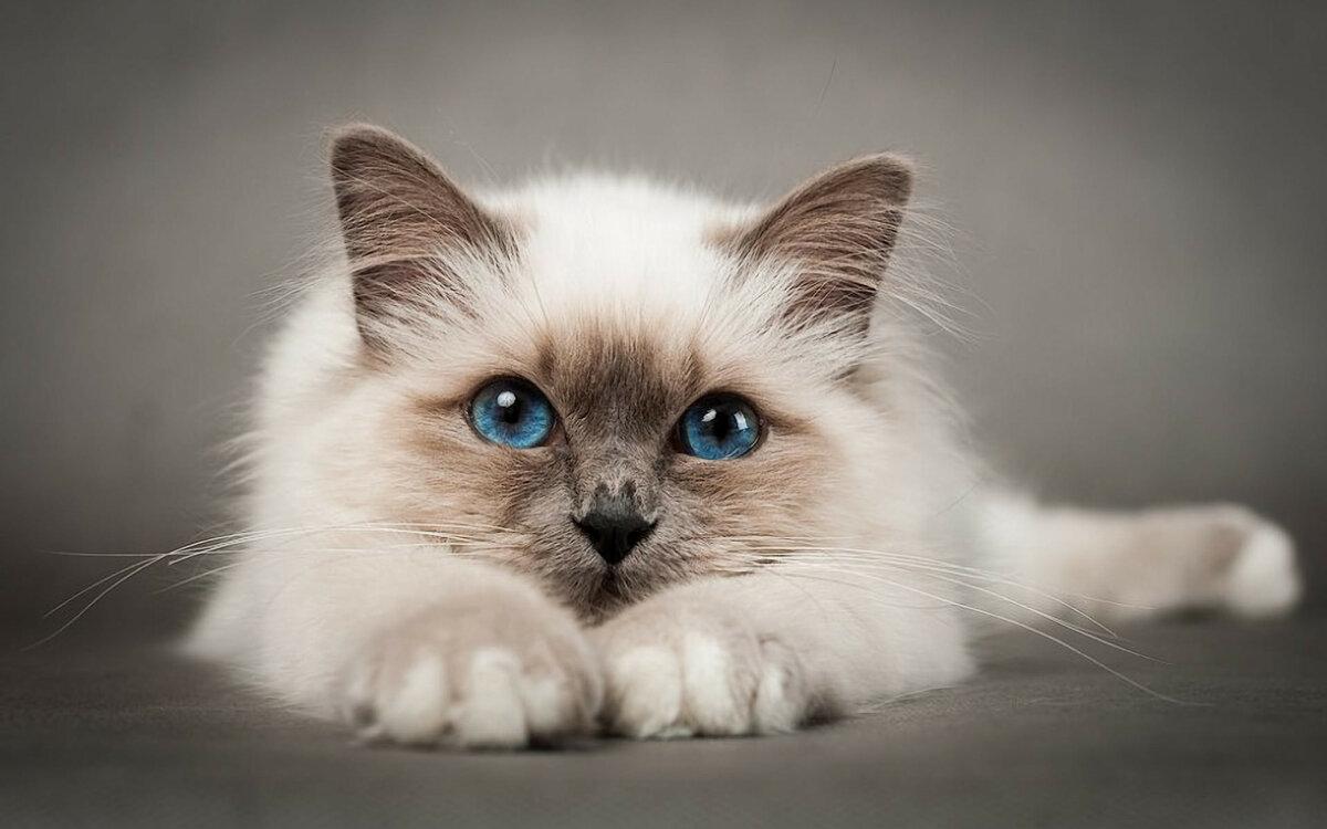 Кошечки в картинках