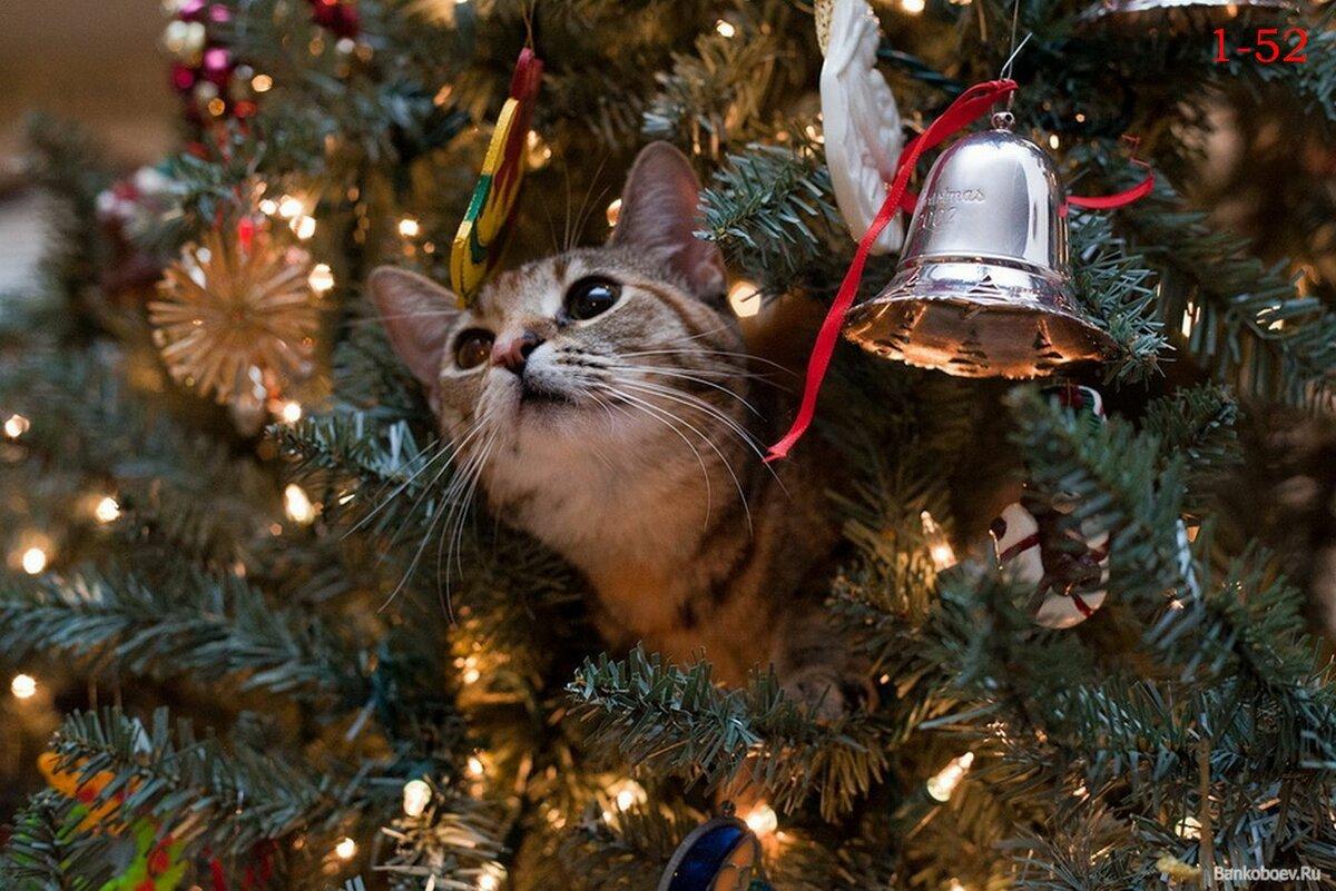 Открытки, картинки новый год смешные с животными
