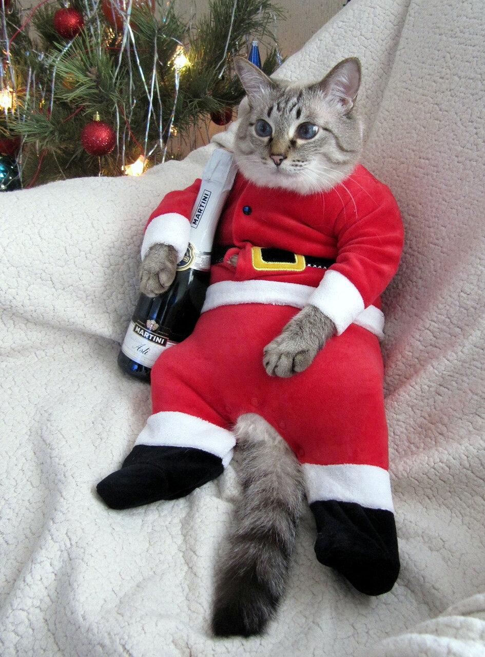 Новый год смешные картинки с животными с надписями, прикольные про
