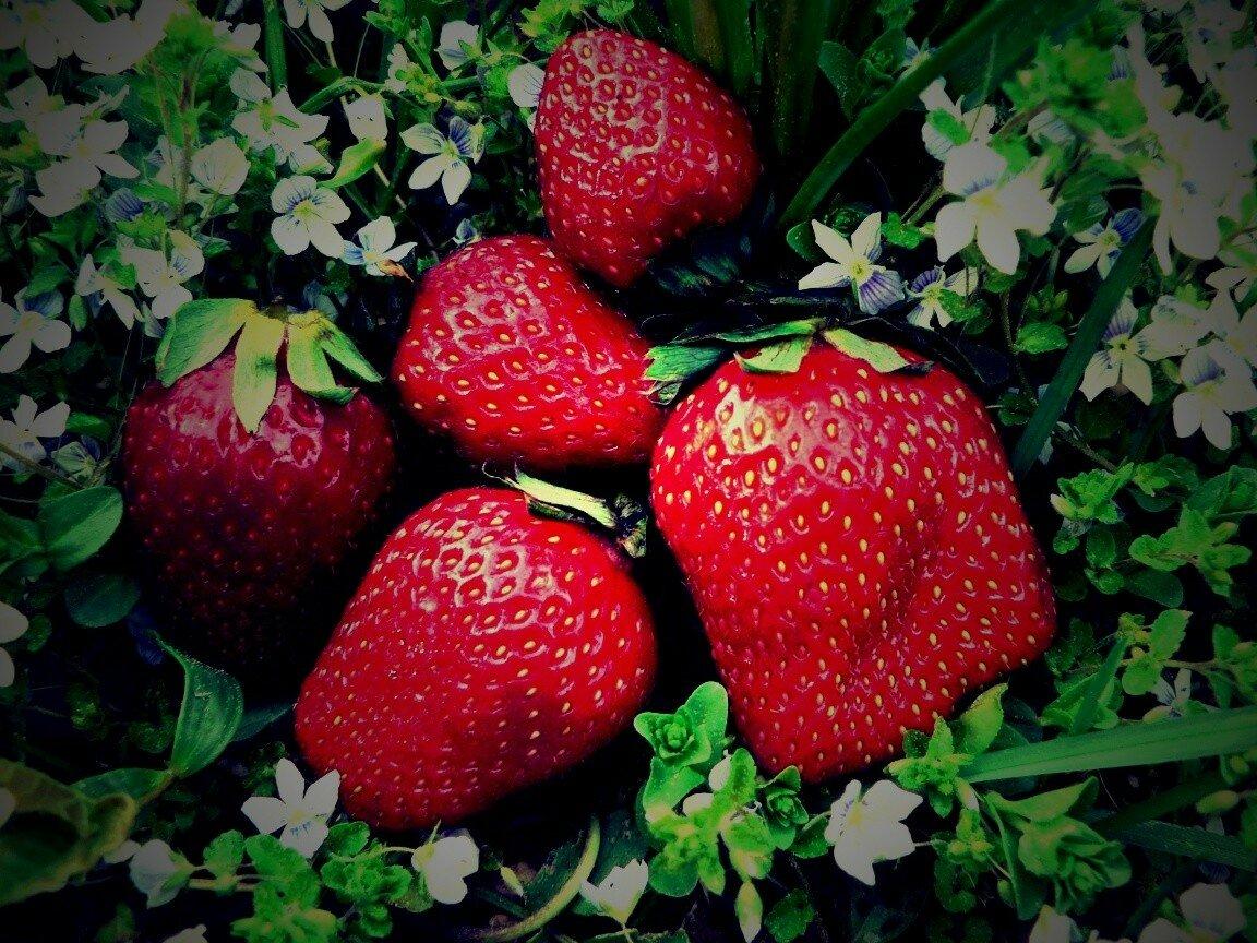 увидите множество фото ягодки клубники холодные зимние