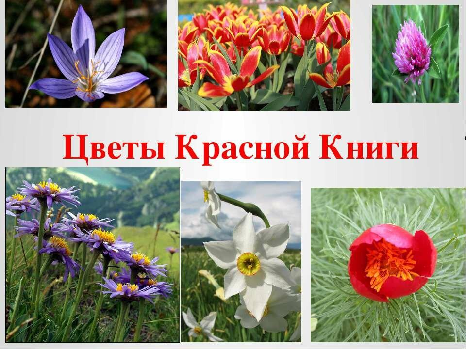 хурма картинки цветов занесенных в красную книгу украины правую сторону