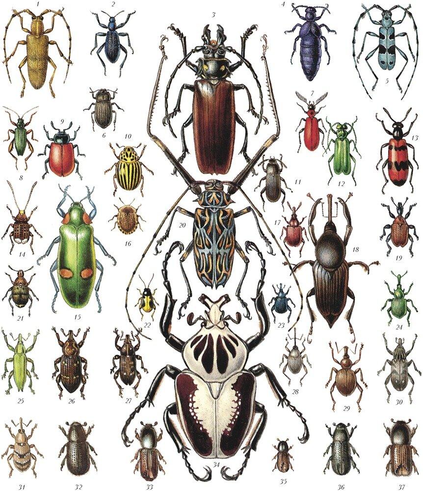 список жуков с картинками вязаные