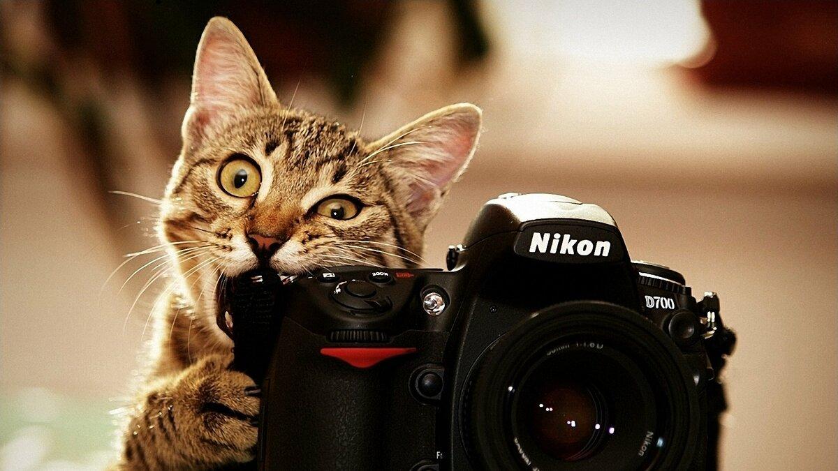 Открытки, картинки с фотоаппаратом смешные