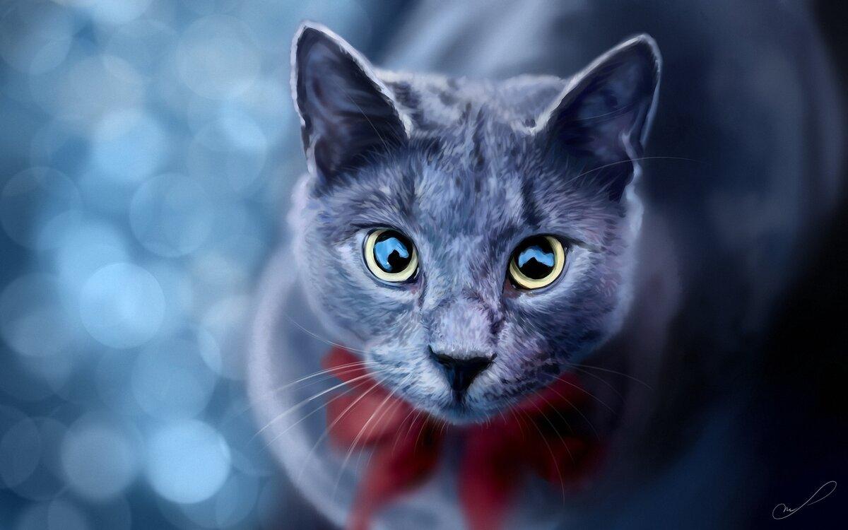 множество картинки с серыми кошками на рабочий стол дело