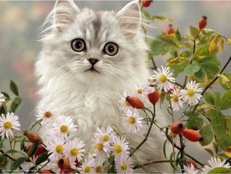 Открытки, открытки хорошего дня котенок