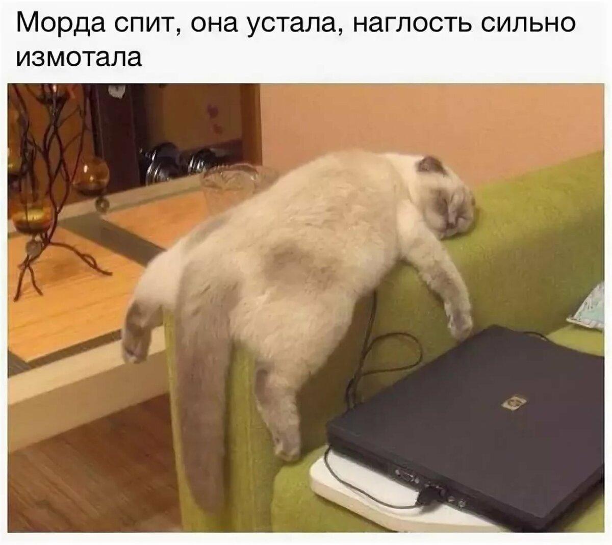 Мишками, когда работаешь по 12 часов прикольные картинки