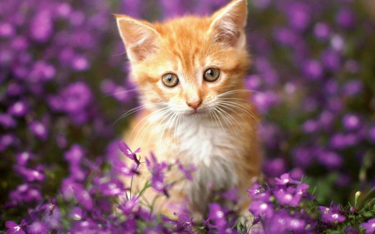 Картинки с красивыми котиками живыми, малышами анимация животных