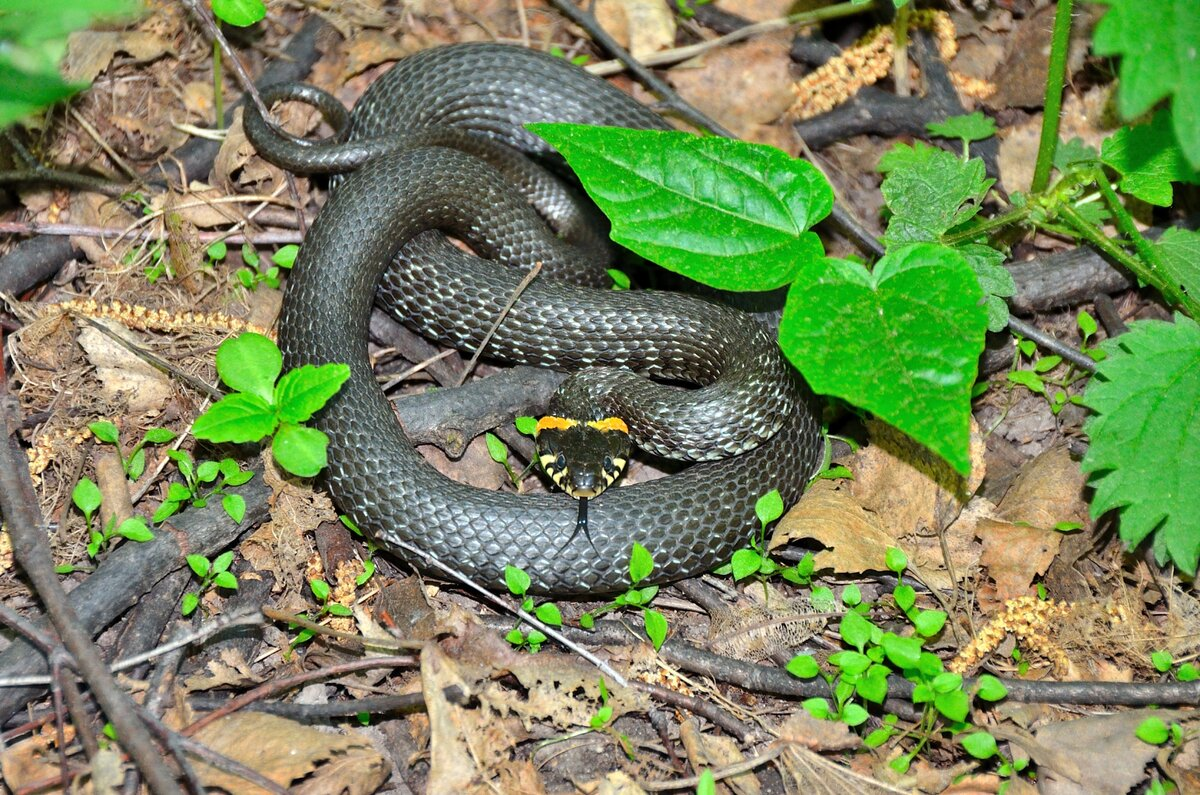 зеленые змеи подмосковья фото и описание центра добираться далеко