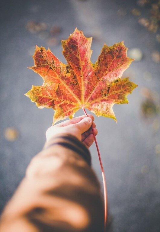 Осень и любовь картинки на аватарку, спокойной ночи