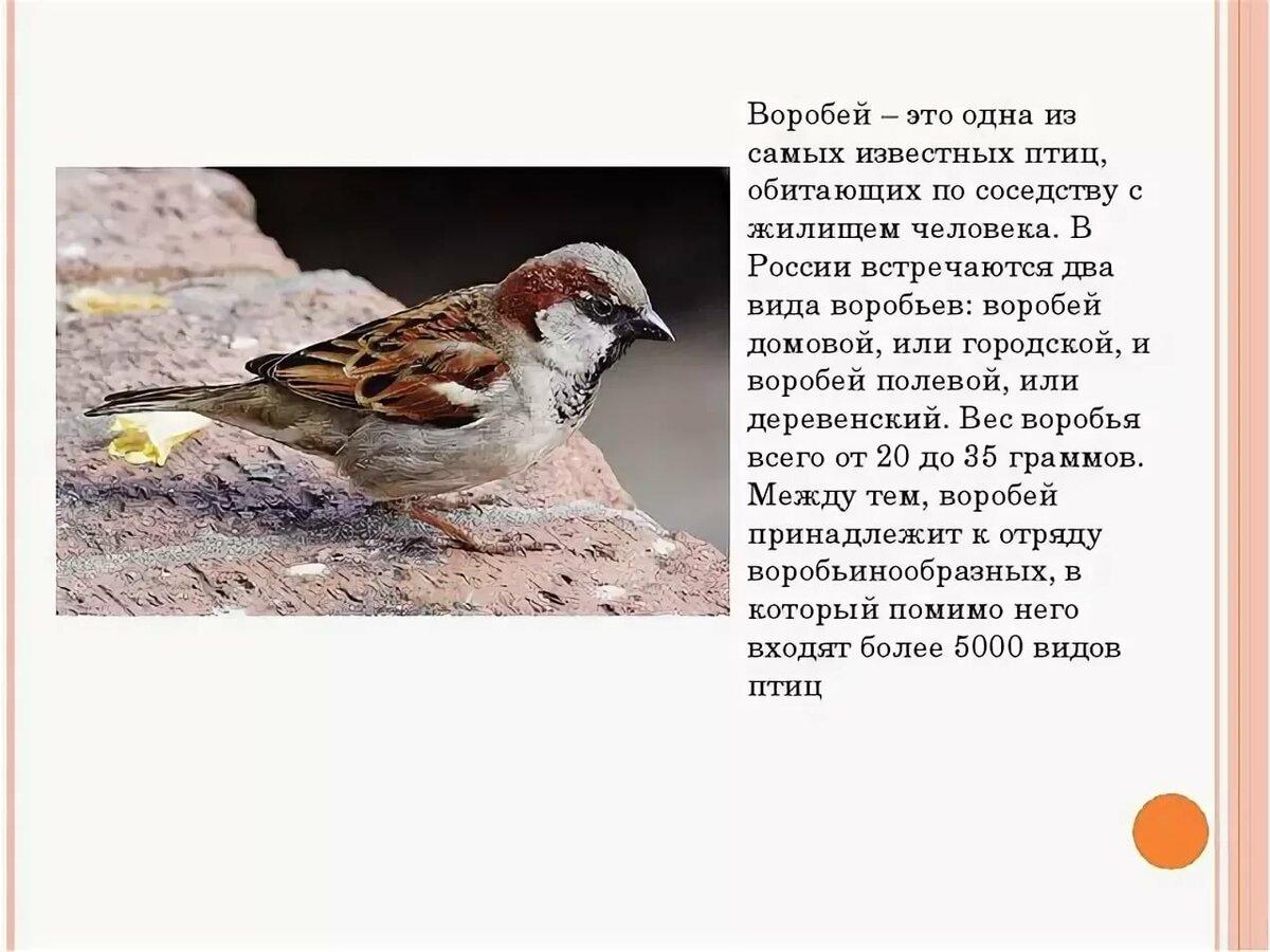 помню все о птице воробей в картинках сообщают очевидцы, находившиеся