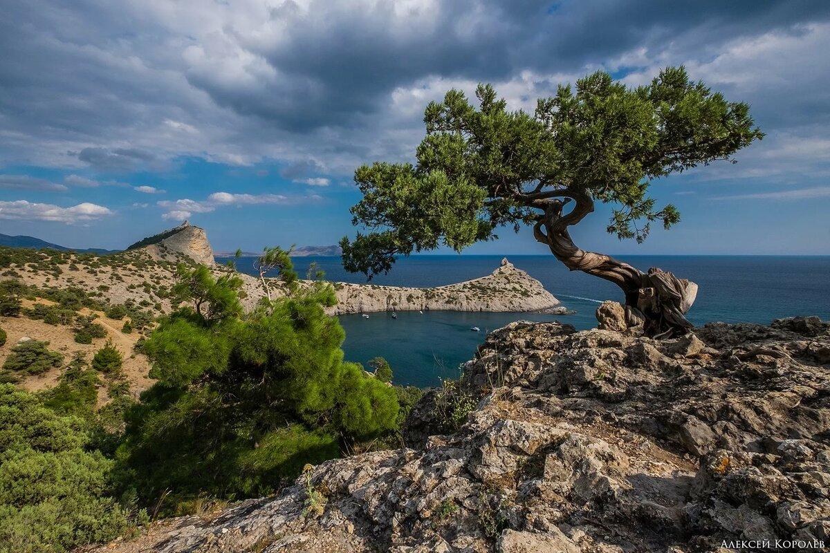 вышли картинка дерево на скале для лайки необходимый