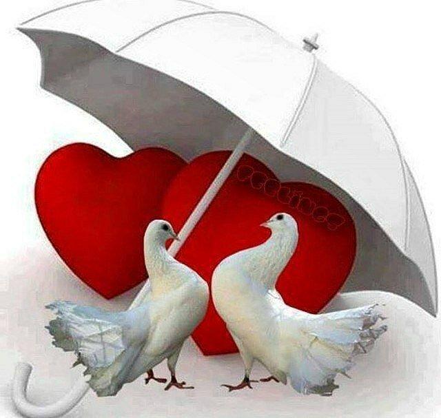 Открытки сердце голуби, написать текст