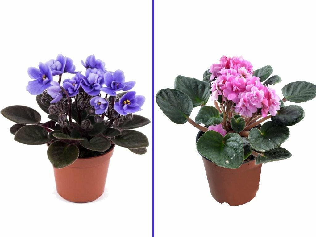 использовать необычный комнатные цветы неприхотливые в уходе с фото долго будем