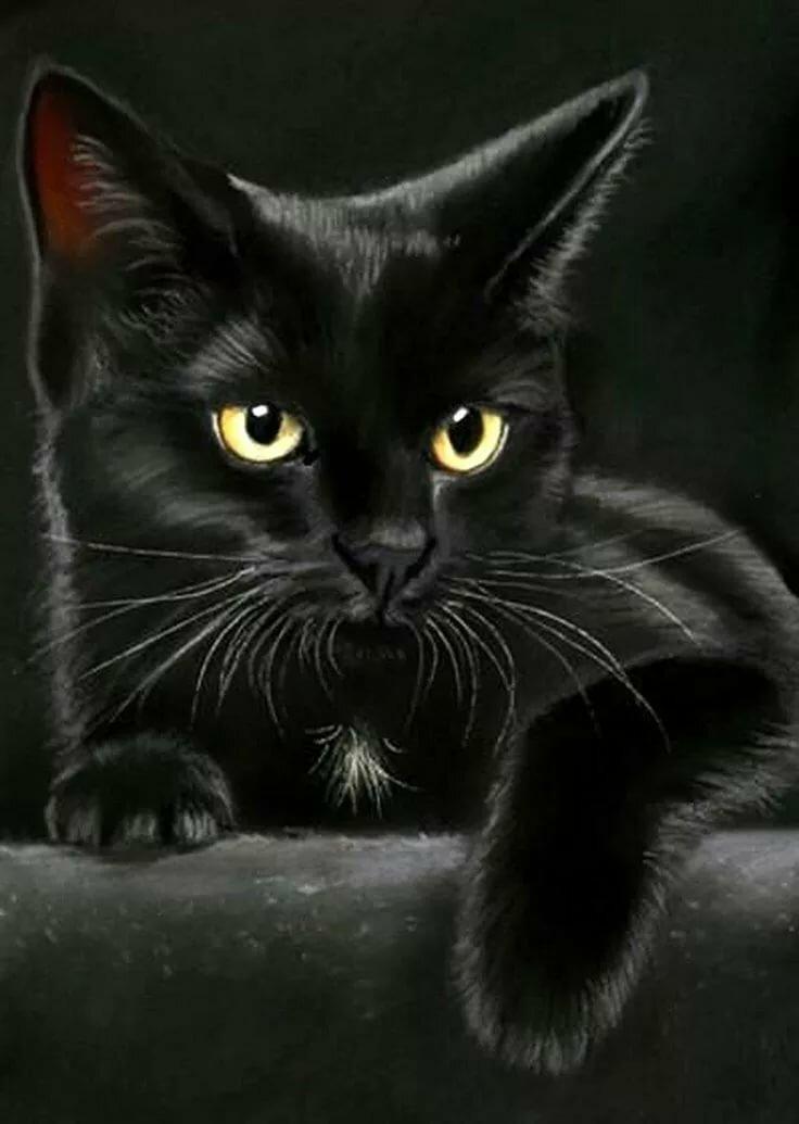 Открытки черные кошки, поздравлениями директора днем