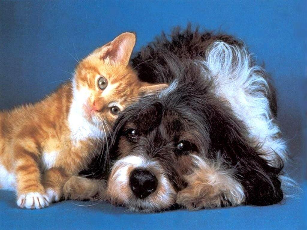 Картинки кошек и собак, дали