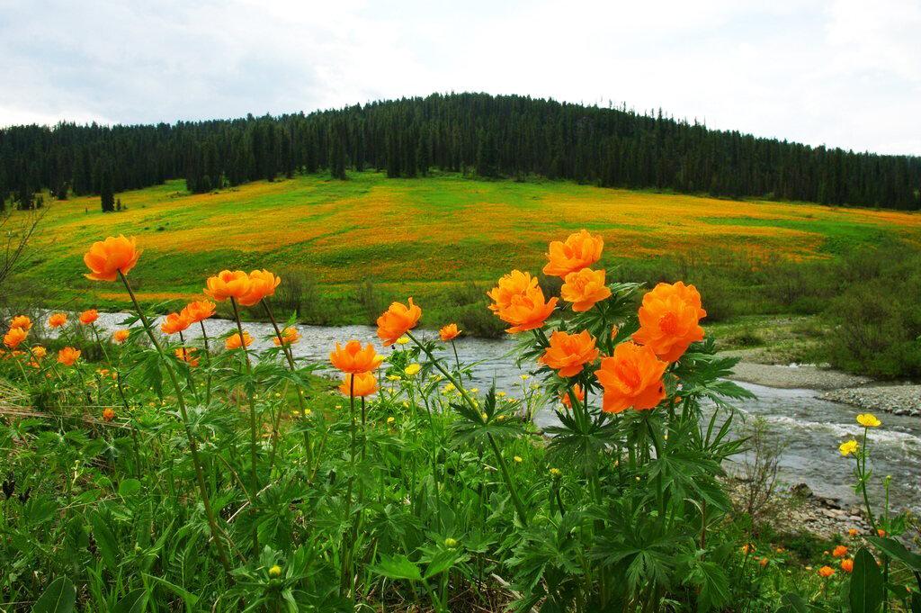 картинки цветы хакасия долго