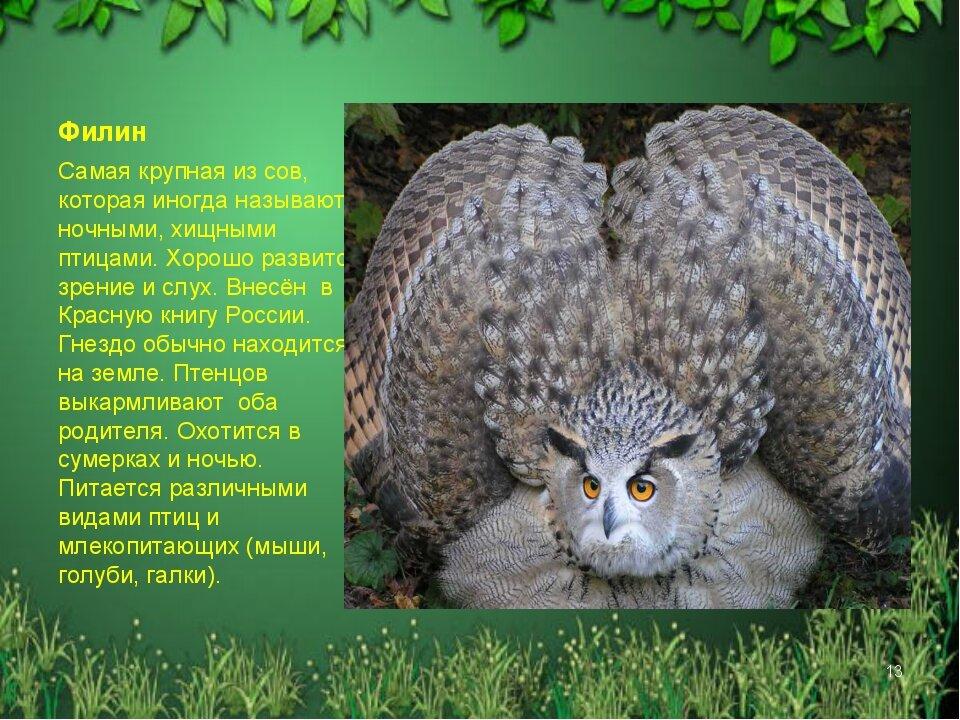 Красная книга алтайского края животные фото и описание картинки