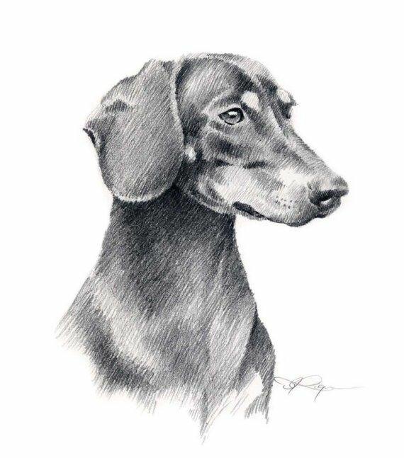 рогатки рисунки такса собака фотографировать во-первых