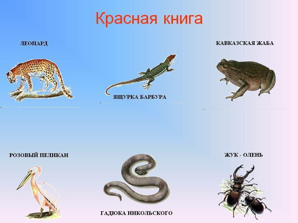Картинки животных из красной книги с описанием