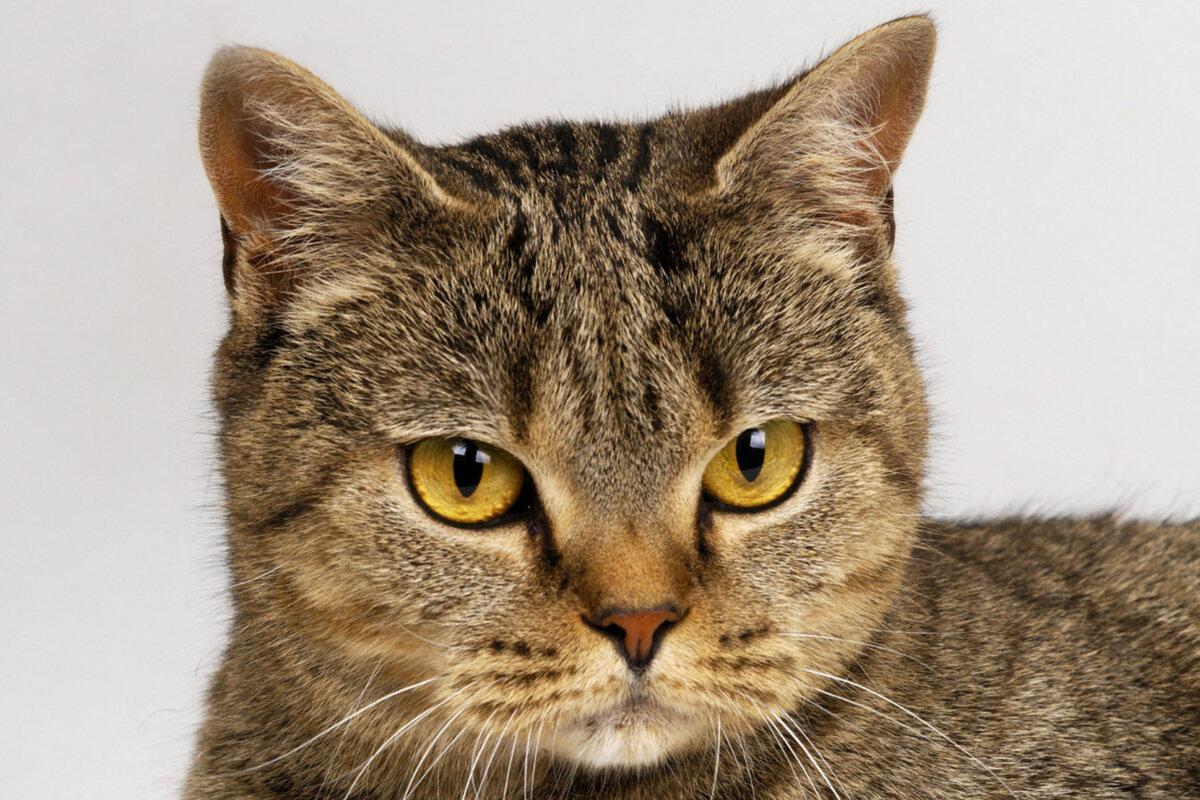 Картинки кошки, поздравления лучшему другу