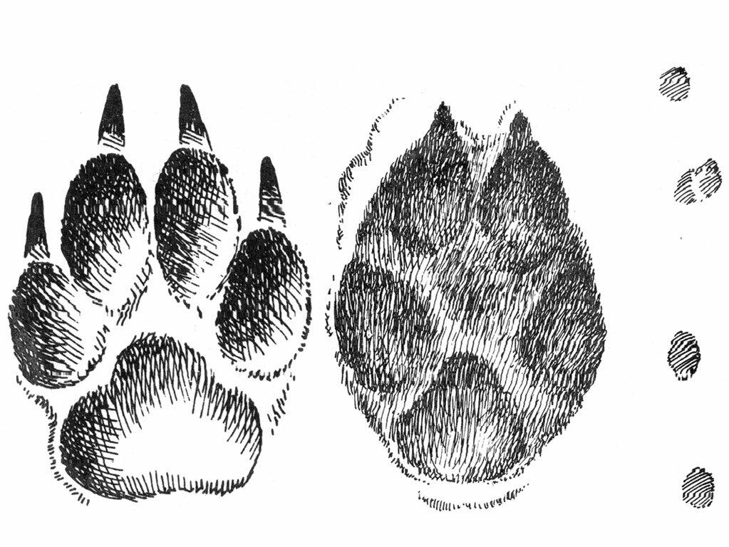Картинка волчьих следов