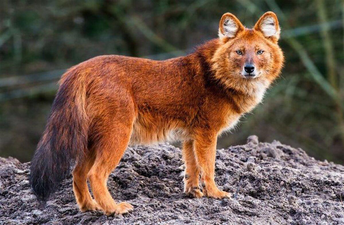 Фотографии животных из красной книги россии