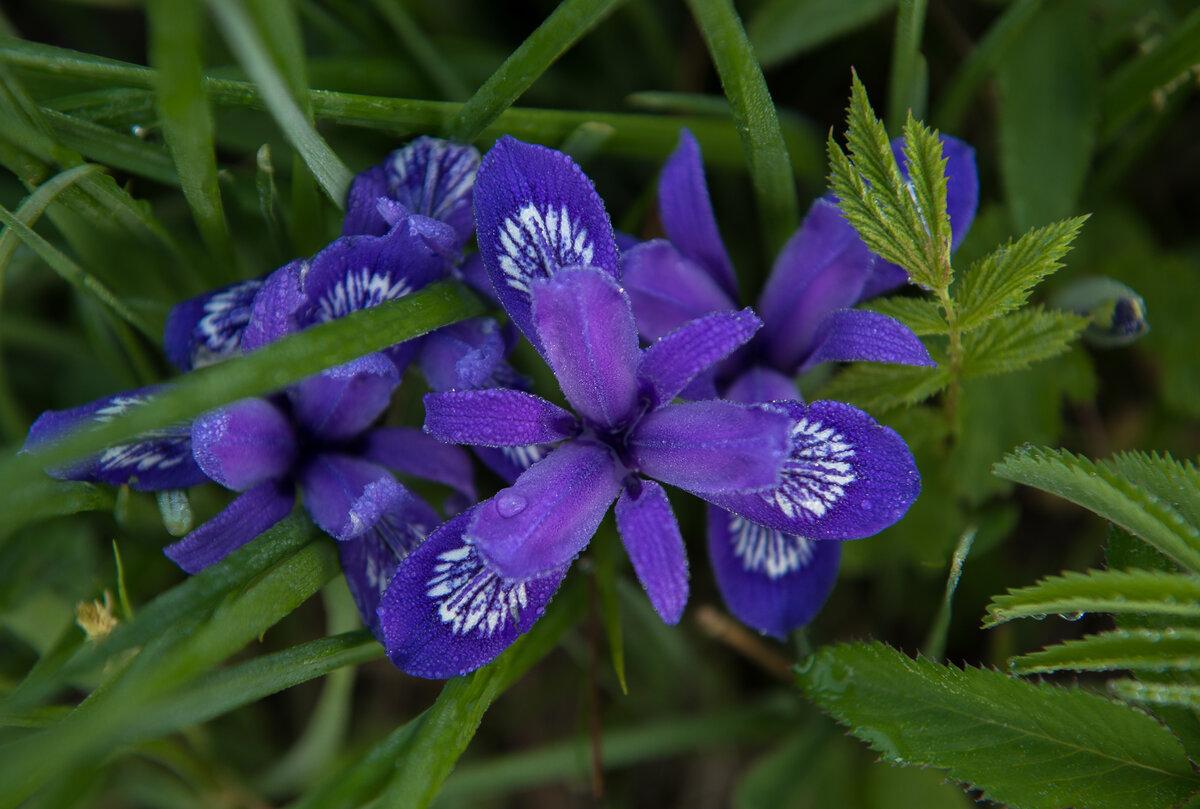 прихожую лесные цветы картинки и названия цветов снимает