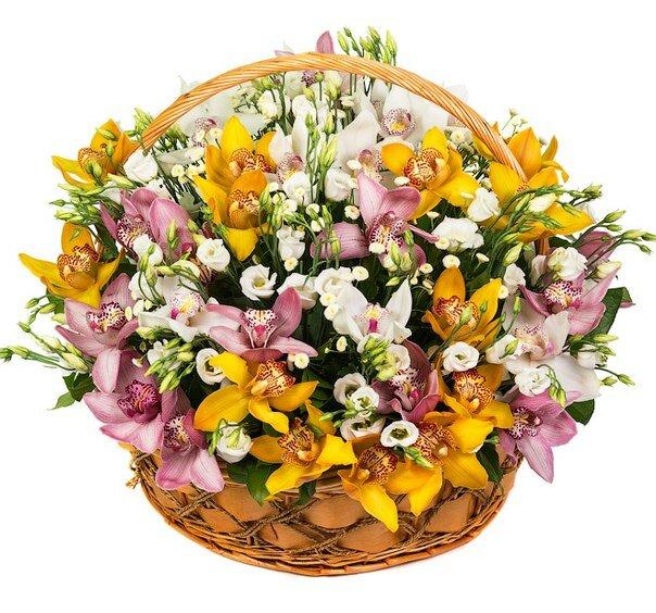 Букет орхидей, букет орхидеи в корзину москва