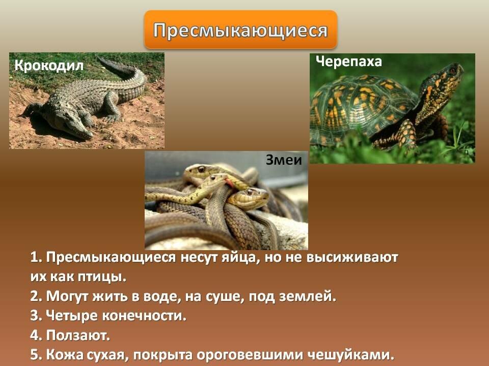 Пресмыкающиеся это какие животные список фото с названиями