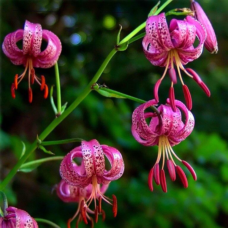 все цветы которые растут в россии фото простой вариант, который