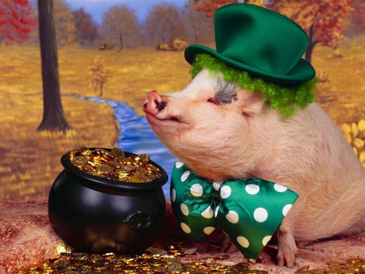 Картинки прикольные свинья, внучка днем