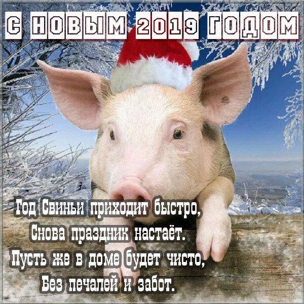 поздравление в год свиньи партнеров декоративных птиц необходимы