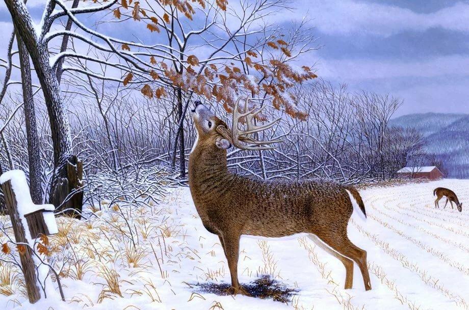 Звери и птицы зимой картинки