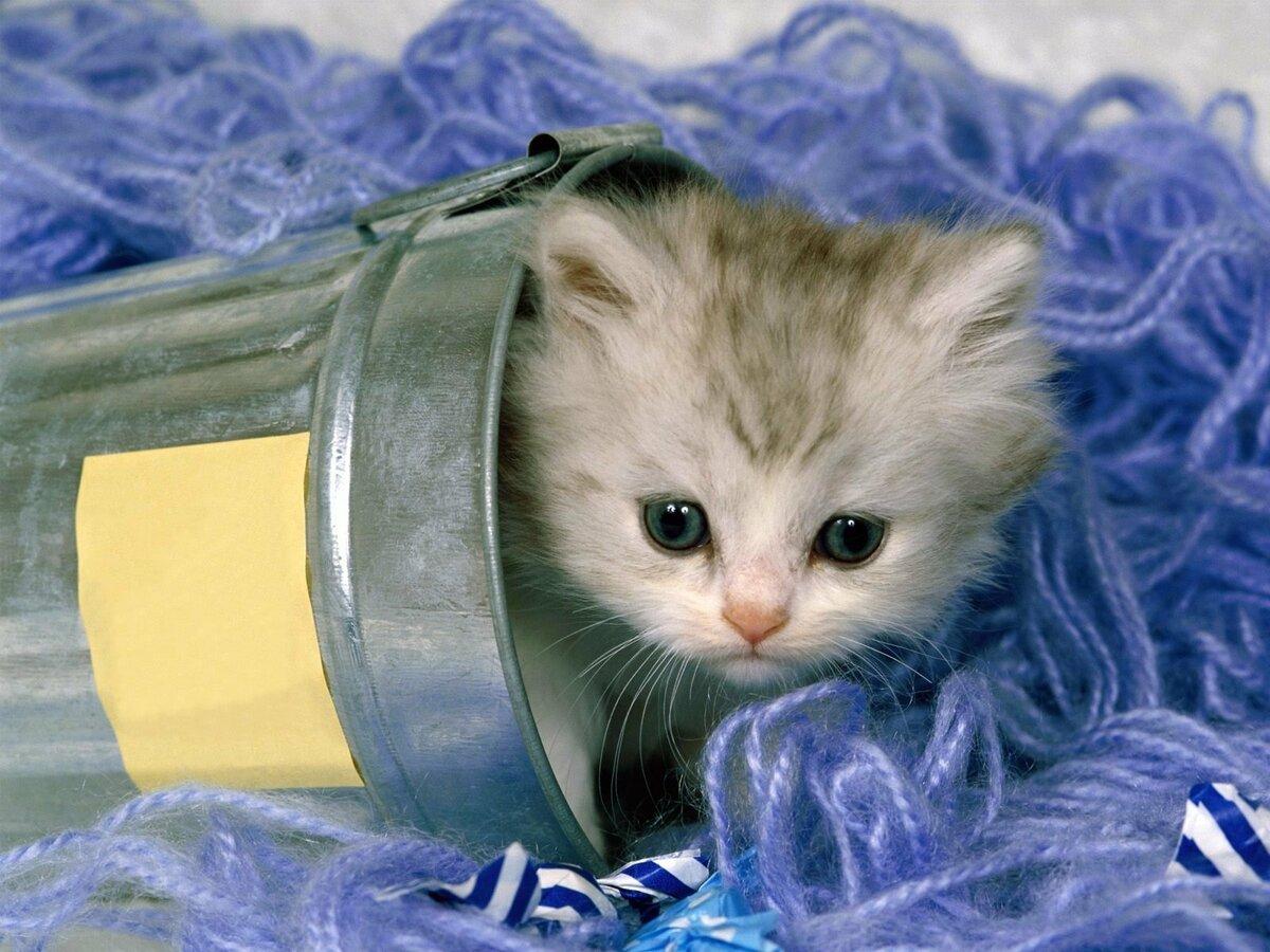 Живая открытка кошка в банке, картинка девушки рулем