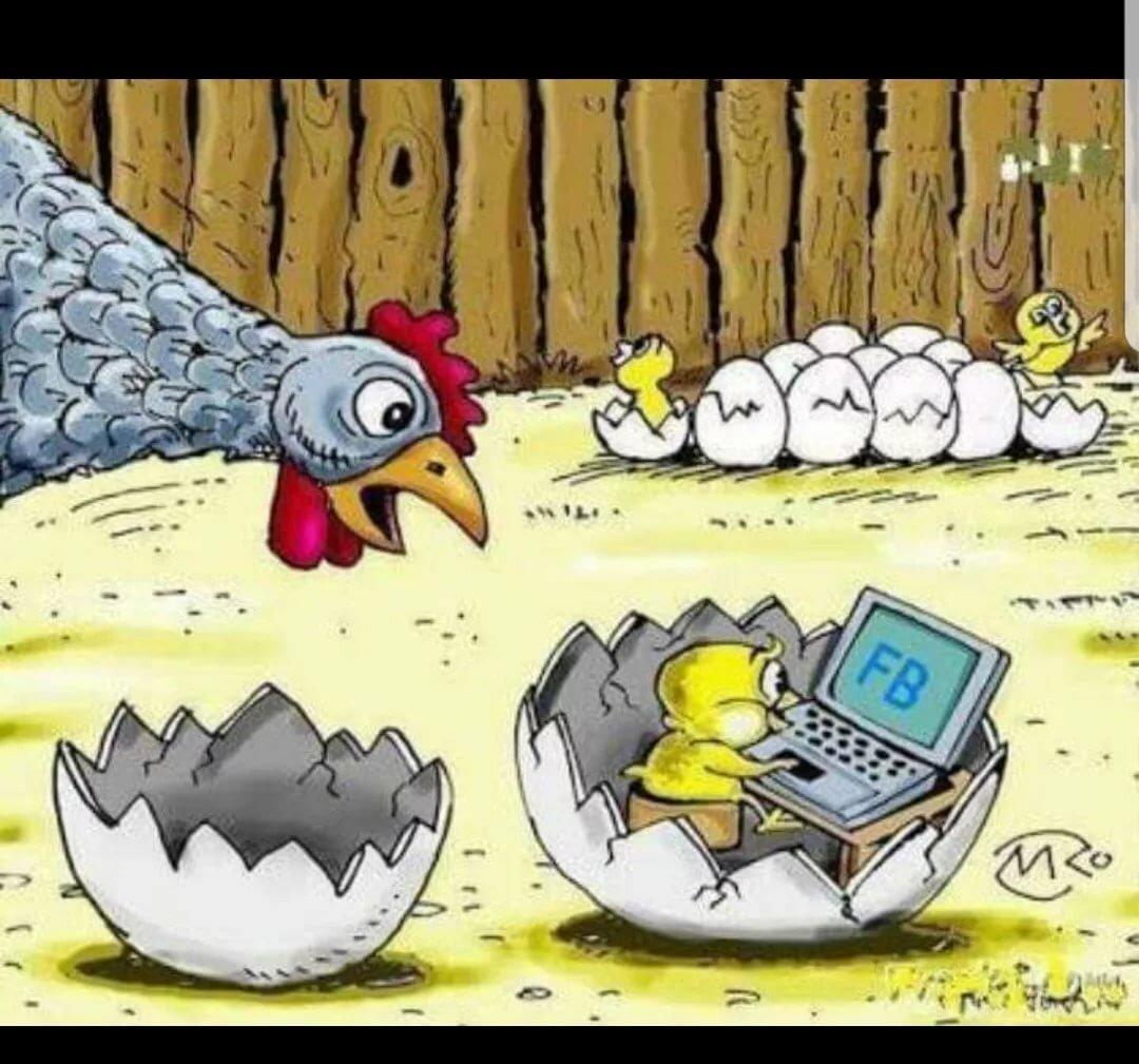 Отличнику картинки, курица с яйцами картинки смешные картинки