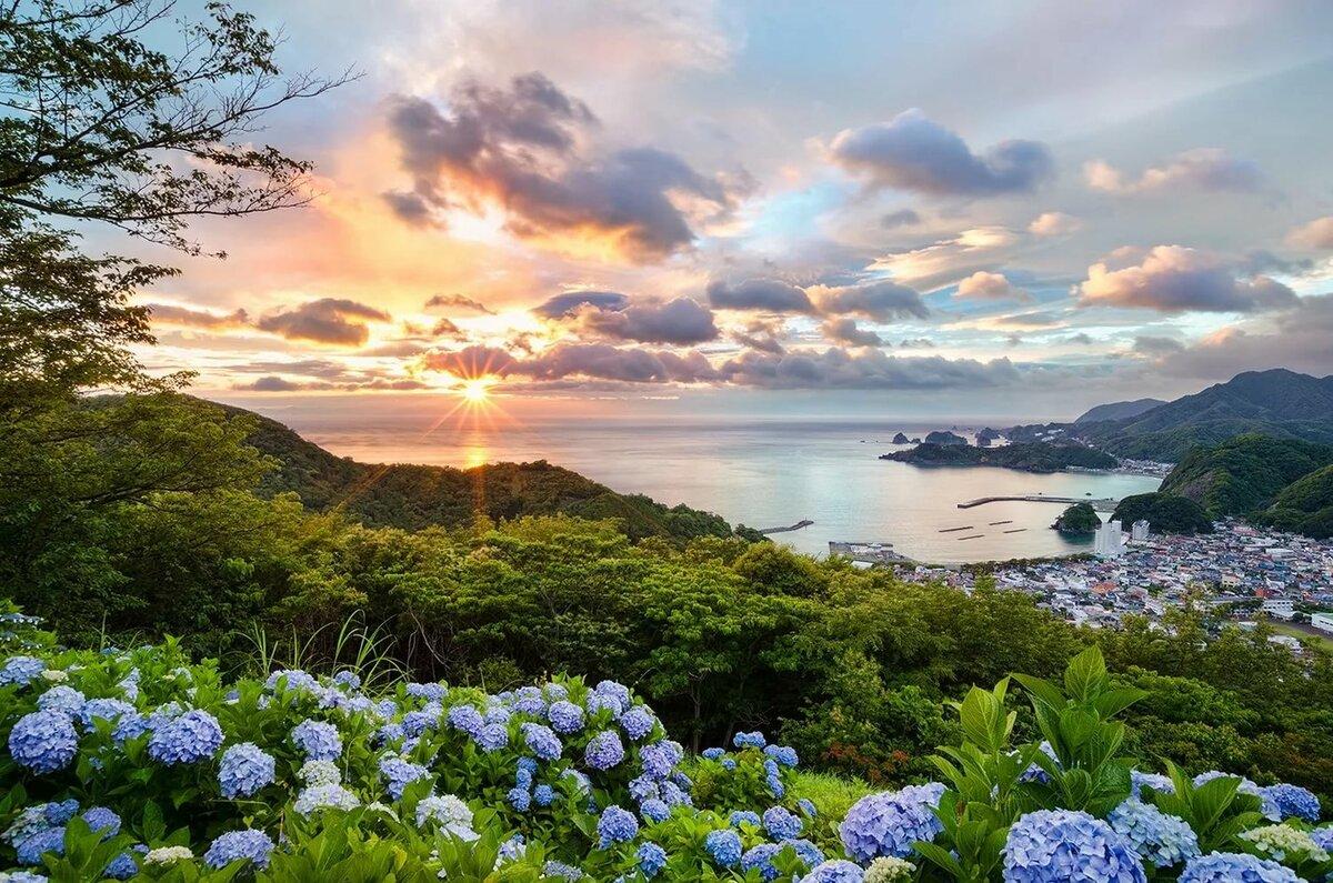 Wallpaper : Jepang, sinar matahari, pohon, pemandangan