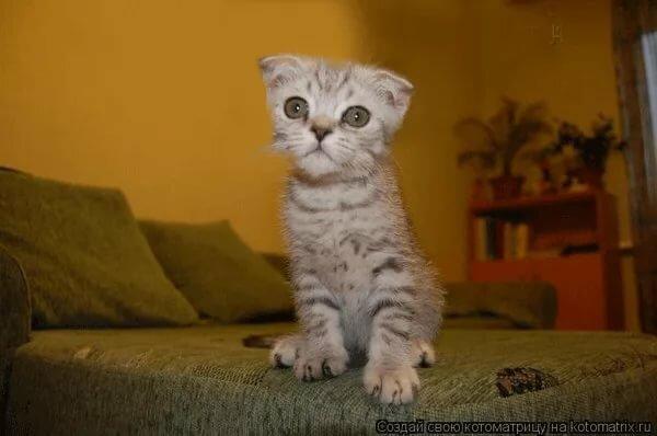 Валентинки, картинки с надписями смешные с кошками и котятами