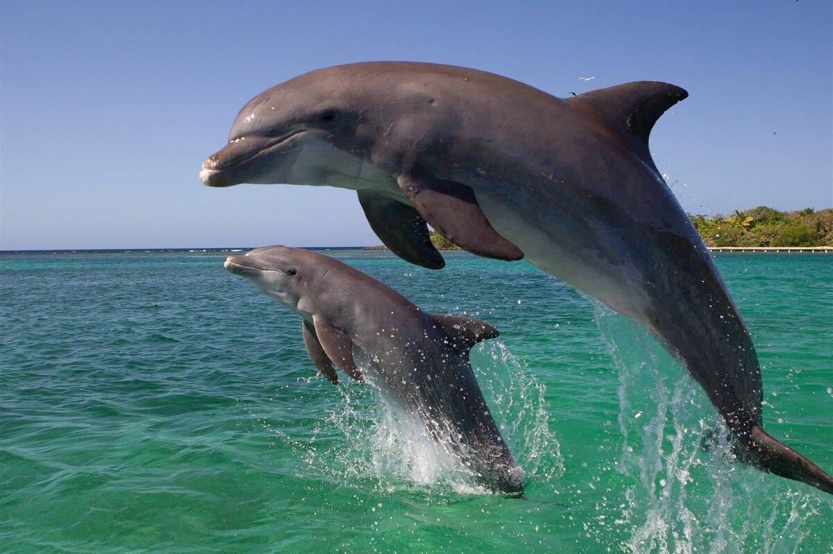 Все картинки дельфина