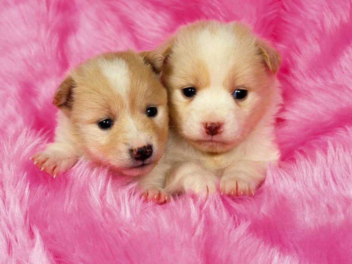 картинка для животные собаки и щенки мой, самый лучший